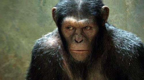 ¿Un chimpancé nominado al Oscar?