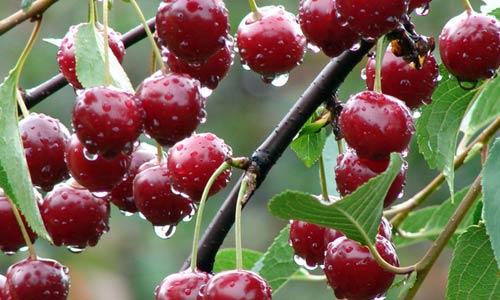 Lanzan una web de venta de alimentos de espacios naturales