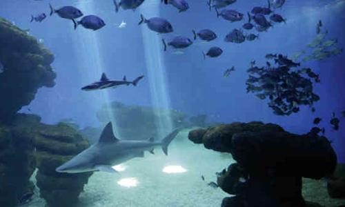 Fin de semana contra el cáncer en el Palma Aquarium