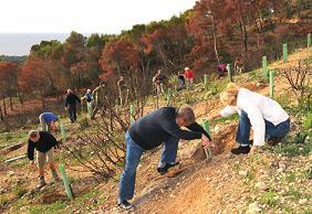 Jornadas de Reforestación en Peguera