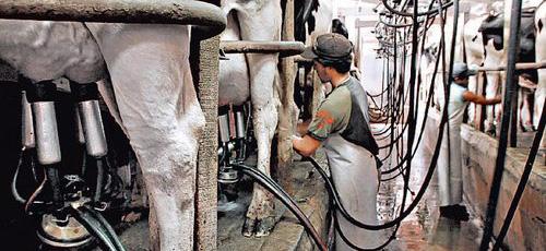 La UE aprueba que se introduzca el contrato lácteo obligatorio
