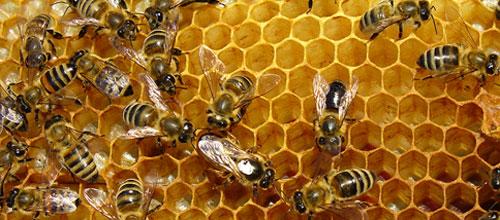 El 61% de los baleares prefiere derivados de las abejas para el resfriado