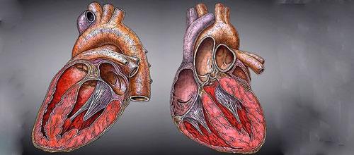 Describen los ritmos cardiacos que conducen a la muerte súbita