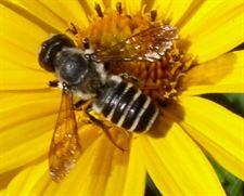 Los insectos también tienen personalidad
