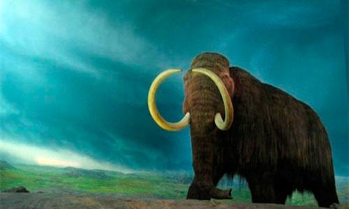 Rusia quiere clonar un mamut lanudo