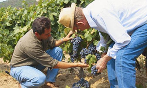 El vino toma fuerza para atraer turismo