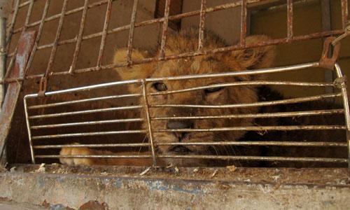 No habrá más circos con animales en Capdepera