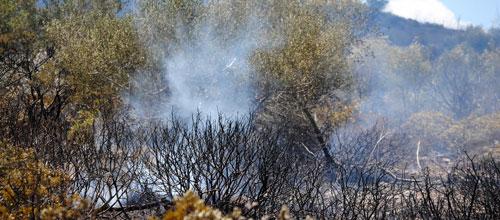 Tres incendios en una tarde