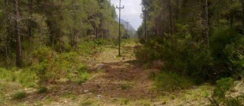 Endesa limpia la masa forestal de las líneas eléctricas en Baleares