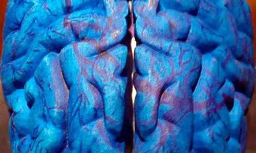 El estrés y la depresión pueden reducir el tamaño del cerebro