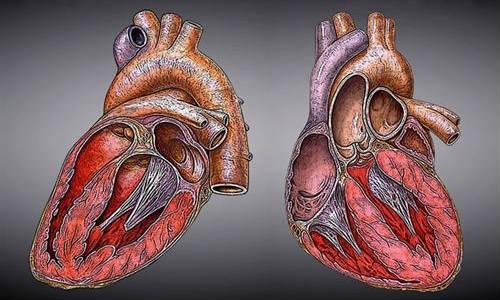 El escáner de calcio coronario mejora la predicción de enfermedades del corazón