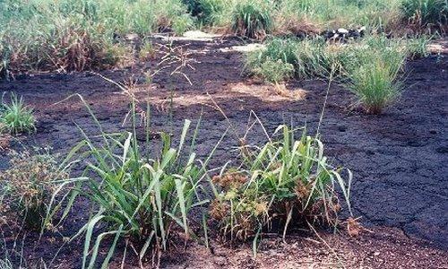Científicos diseñan un sistema para predecir la descontaminación de un suelo