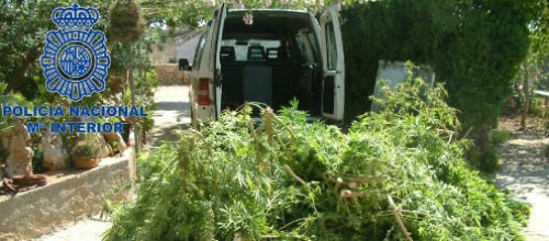 Detenidos dos j�venes en Manacor por cultivar marihuana