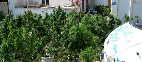 Detenido un hombre en Palma con 422 kilos de marihuana