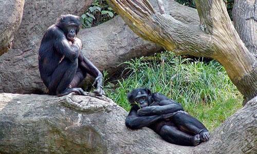 Las abuelas influyeron en la longevidad de primates y humanos