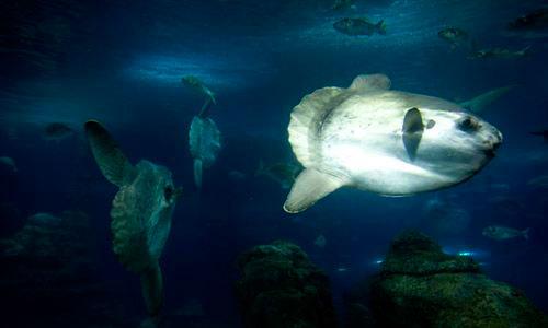 El cambio climático puede reducir un 20% el peso de los peces marinos