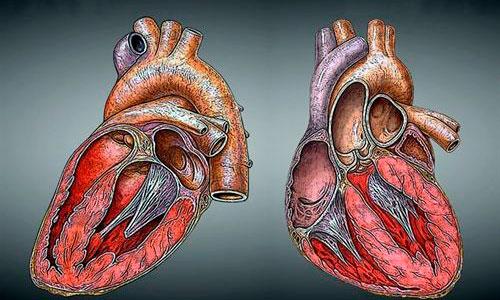 Las muertes por infarto se han reducido un 40% desde 1990