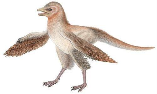 Un fósil de dinosaurio desafía la teoría evolutiva de las aves