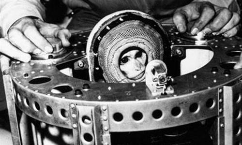 Irán lanza un mono al espacio con éxito