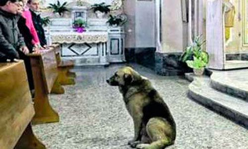 Un perro va a misa todos los días desde que murió su dueña