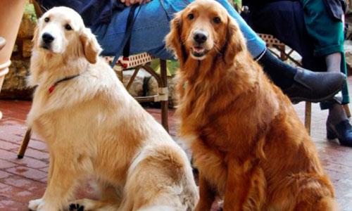 Lola y Pluto, los nombres de perro preferidos por los españoles
