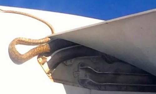 Una pitón de tres metros viaja en el ala de un avión