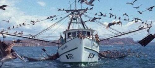 La pesca profesional genera 672 puestos de trabajo en Baleares