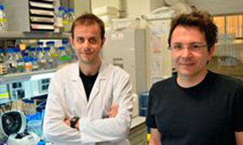 Descubren un mecanismo que acelera el cáncer