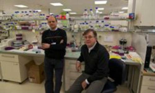 Científicos vascos logran frenar el avance del cáncer de colon