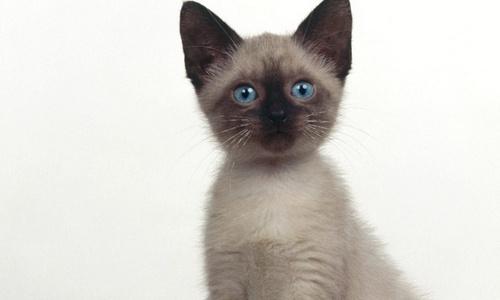 Mata a un gato metiéndole un petardo en el ano