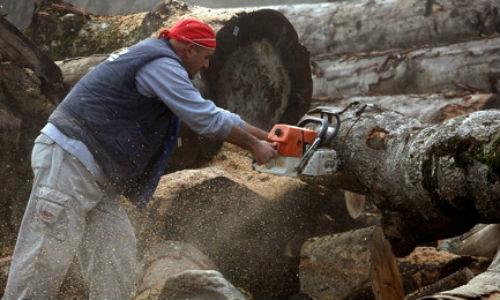 Masiva tala ilegal de árboles en Grecia por la crisis