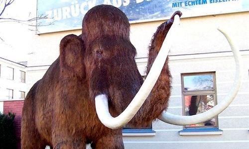 Cient�ficos rusos estudiar�n el cerebro de un mamut