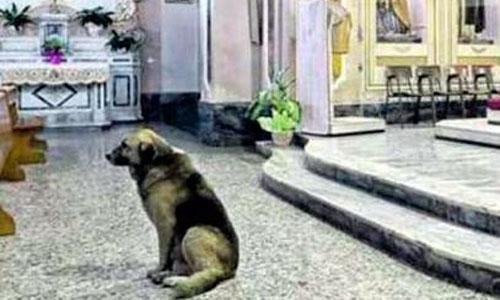 Muere el perro que esperaba a su dueña en la Iglesia