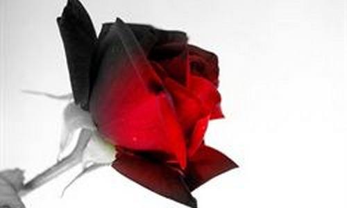 Ciberestafas por San Valentín