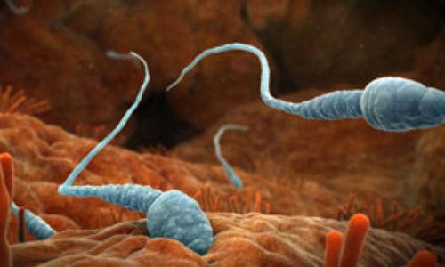 Mirar mucho la TV provoca la reducción del esperma