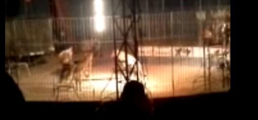 Un tigre mata a su domador en el circo