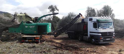 Mallorca enviará 3.500 toneladas de biomasa a Italia para producir energía