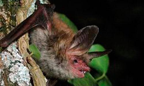 Los murciélagos son resistentes al fuego