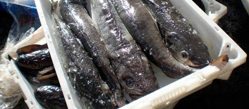 La venta ilegal de pesca supondrá sanciones de hasta 150.000 euros