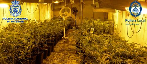 Dos personas detenidas tras incautarles 347 plantas de marihuana