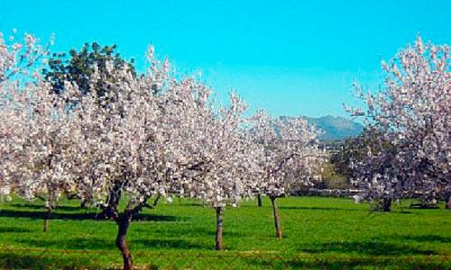 Primavera a la vista