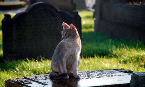 Un gato visita la tumba de su dueño cada día y le entrega regalos
