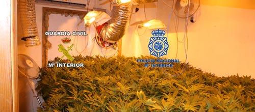 Desmantelado un laboratorio ilegal de marihuana en Sencelles