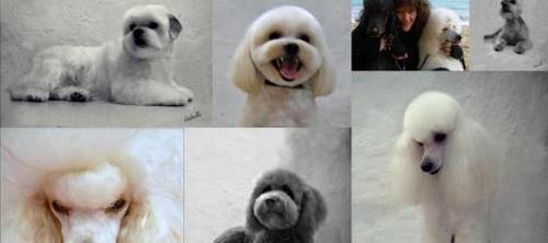 Peluquerías caninas y felinas se unen para enfrentarse al intrusismo