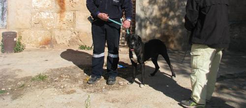 Rescate de los perros de Son Moix