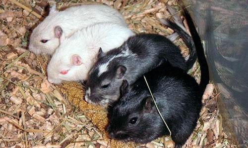Rusia lanza un satélite biológico con 100 animales