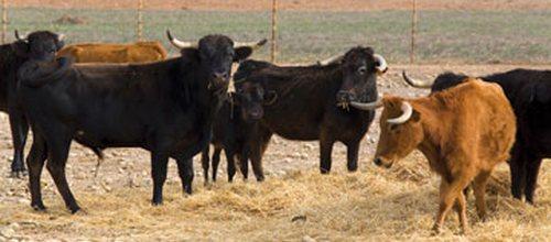 El Fogaiba destina 179.000 euros para erradicar enfermedades animales