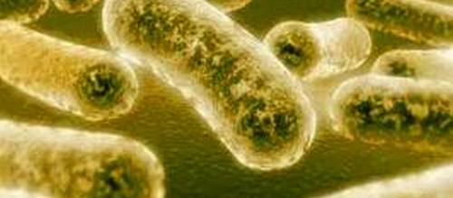 Baleares, líder en sífilis y gonorrea