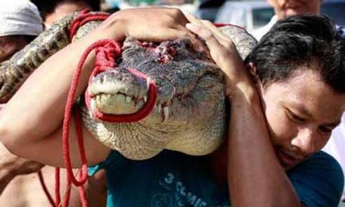 Un cocodrilo de dos metros se cuela en el Parlamento tailandés