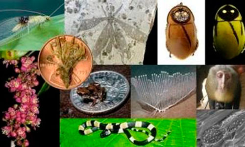 Una cucaracha que brilla, en el 'top 10' de nuevas especies